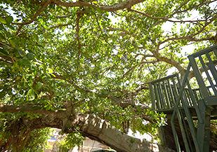 園庭の木の写真